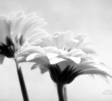 Soft idyll by Olga