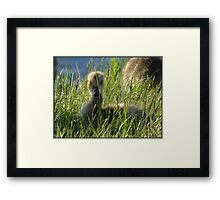 Last Chick to be Hatched Framed Print