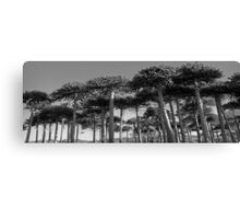Angled Monkey Puzzle Trees Canvas Print