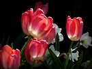 Spring Blooms by Lucinda Walter