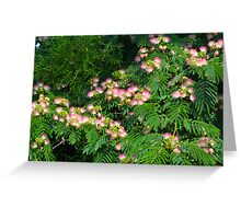 Mimosa Tree Blooms North Carolina USA By Jonathan Green Greeting Card