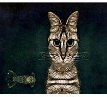 Jules Verne's Cat Photographic Print