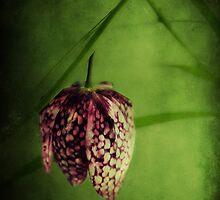 chessflower by duettwerk