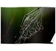 Webs 6 Poster