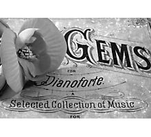 White Begonia on Gems - Pianoforte Photographic Print