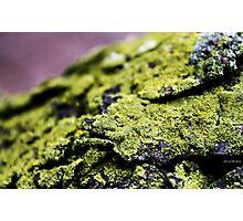 Moss. Photographic Print