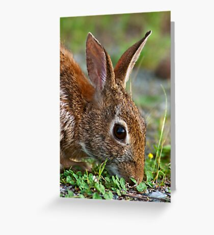 Eastern Cottontail Rabbit Greeting Card