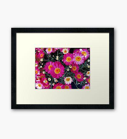 Teeny Tiny Terrific Asters Framed Print