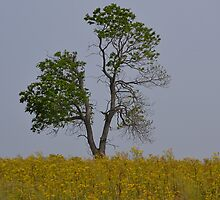 Tree in a Sea of Gold by Sheryl Gerhard