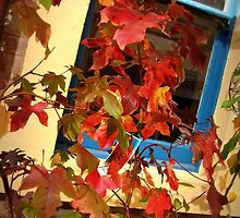 Autumn, Hahndorf by Ruth Eckert