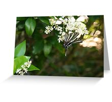 Early Flutter 4 - under the boughs Greeting Card