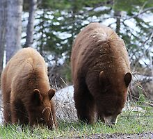 Cub and Mom Grazing by Alyce Taylor