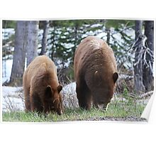 Cub and Mom Grazing Poster