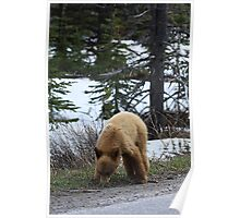 Blonde Cub Grazing Poster