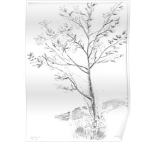 Drawing Day Tree Poster