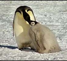 """Feed Me Mum"" - Emperor Penguins, Antarctica  by Carole-Anne"