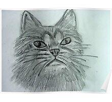 Justa Cat Poster
