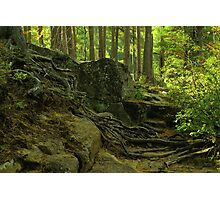 the green enchanted forest Photographic Print
