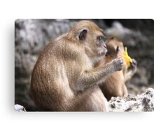 Monkey Island resident Canvas Print