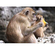 Monkey Island resident Photographic Print