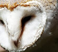 Mask of the Barn Owl by Guy Carpenter