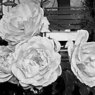 Roses bnw by demonkourai