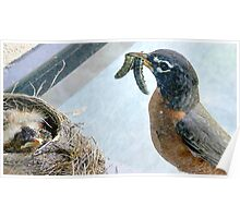 Baby Robins 7 Poster