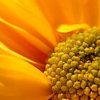 Yellow Daisy by Debbie Pinard