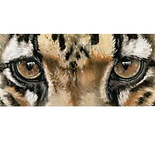 Eye-Catching Clouded Leopard Photographic Print