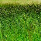 Green, green grass by MWhitham