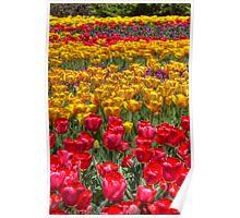 Tulip Festival - Downtown Ottawa Poster