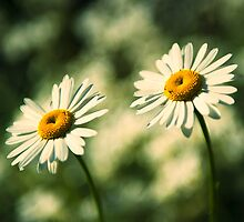 Double daisy by Swirley