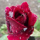 Rainy Day by Stephen Willmer