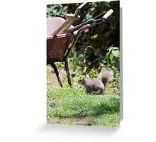 Mr Squirrel Greeting Card