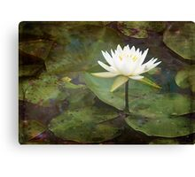 Light in the Pond Canvas Print