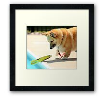 Amazed ! Framed Print