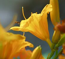 Tiny Bee and Stella de Oro by Eileen McVey