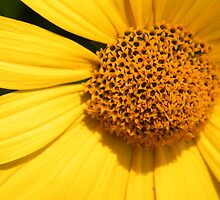 Yellow Daisy by WeeZie