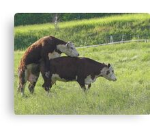 Somebody is Kinda Confused Canvas Print