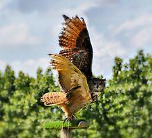 Wings by Mike Higgins