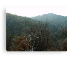 Late December Afternoon In The San Bernardino Mountains Canvas Print