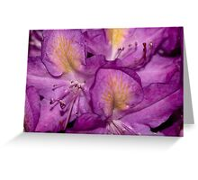 Flower Remains Greeting Card