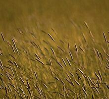 Rye Grass by Nick Boren