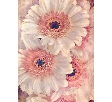 Gerbera bouquet Photographic Print