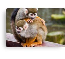 Monkey cuddle Canvas Print