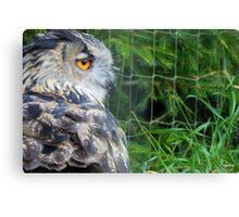 Owl in the Bear Park Canvas Print