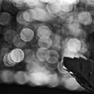 When B&W is Bokeh...: On Featured work: The-women-photographer Group by Kornrawiee