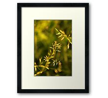 Strong but delicate Framed Print