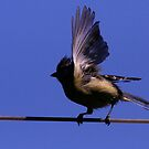 On a Tightrope by snapdecisions
