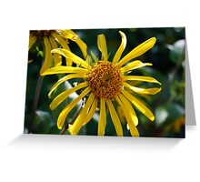 Wyethia elata Greeting Card